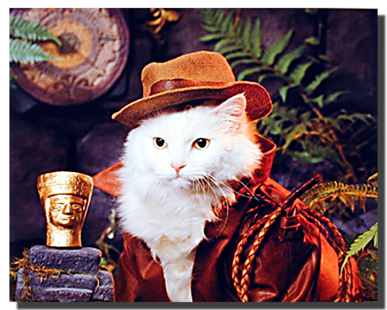 Indiana_Cat_Posters__13574.1431412405.1280.1280